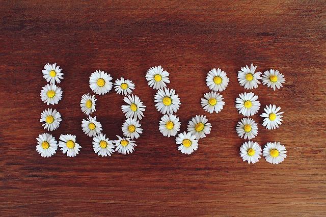 daisy-1403042_640